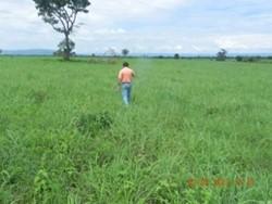 Rural à venda Nucleo Rural Chapada - DF 135   300 ALQUEIRES 100%PLANA/FORMADA 8 KM RIO FORMOSA GO