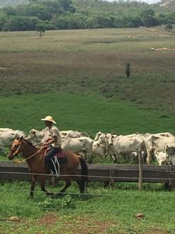Rural à venda UNAI   UNAI MINAS GERAIS. FAZENDA TODA FORMADA,UNAI-MG,241 HECT. ESCRITURADA,GEO.