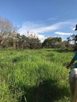Rural à venda BOM JARDIM DE GOIAS   OPORTUNIDADE