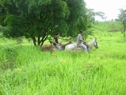 Rural à venda RODOVIA DF-001   URUAÇU-GO 677 HECTARES 90%FORMADA,SEDE BOA