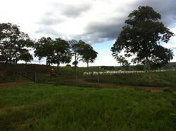 Rural à venda Zona Rural   GUARANI-GO 231 ALQ.PRÓPRIA P/ENGORDA DE GADO,COM GEO