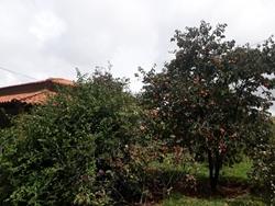Rural à venda NUCLEO RURAL LAGO OESTE