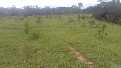 Rural à venda ZAIDA PINTO BOAVENTURA, S/N QUADRA 32 LOTE 12-A