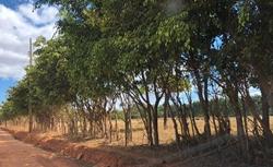 Rural à venda NUCLEO CAUB II   LOCALIZAÇÃO PRIVILEGIADA. CAUB II CATETINHO