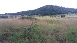 Rural à venda NIQUELANDIA EXCELENTE  FAZENDA