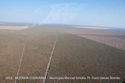 Rural à venda MANOEL EMIDIO   Fazenda 21.000ha, plana no Município de Manoel Emídio - Piauí