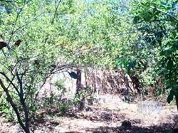 Rural à venda PARANA   Fazenda Princesa dos Campos - Paranã-TO